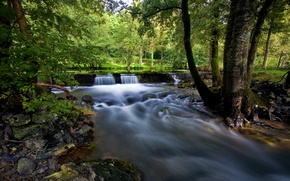 Picture forest, summer, trees, lake, stream, stones, moss