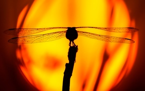 Picture the sun, sunset, dragonfly, silhouette, insect