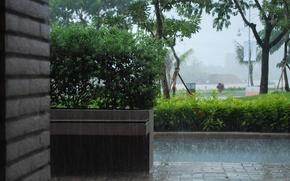 Picture nature, the city, rain