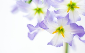 Picture yellow, white, Purple
