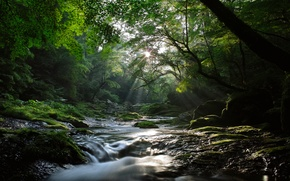 Picture forest, the sun, rays, light, nature, river, stream, cool, maples