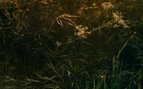 Picture grass, macro, sunlight