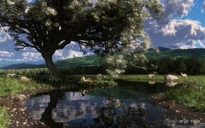 Picture water, girl, lake, pond, stones, tree, deer, art, DOE