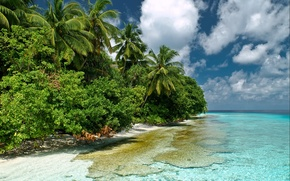 Wallpaper palm trees, the sky, nature, the bushes, the Maldives, sea, water, transparency, the Indian ocean, ...
