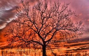 Picture winter, the sky, clouds, sunset, tree, glow