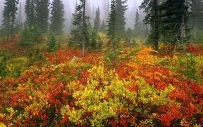Wallpaper autumn, forest, fog