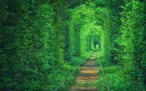 Picture nature, Ukraine, tram tracks, railway road, tunnel love, trees foliage