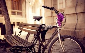 Picture flowers, street, bike, bench, chain, the city