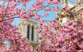 Wallpaper flowers, France, Paris, spring, In The Heart Of Paris Bogomateri