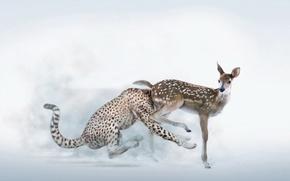 Picture humor, leopard, brake, Fawn