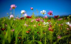 Wallpaper summer, macro, flowers, nature