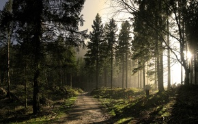 Wallpaper road, forest, the sun