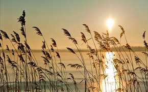 Picture grass, the sun, nature, fog, river, dawn, morning