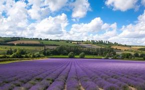 Picture clouds, field, England, Kent, lavender, England, Kent, Castle Farm, Шорхэм, Shoreham
