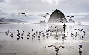 Picture sea, beach, birds, rocks, seagulls
