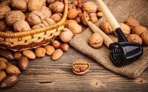 Picture nuts, basket, almonds, forest, walnut, the Nutcracker