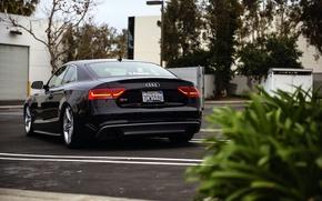 Picture Audi, Audi, black, black, rear