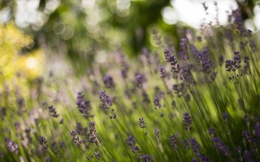 Picture bokeh, stems, lavender, forest