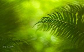 Wallpaper bokeh, macro, sheet, light, fern