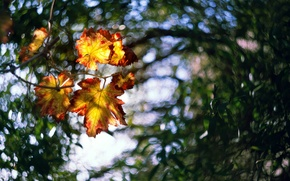 Picture leaves, light, blur