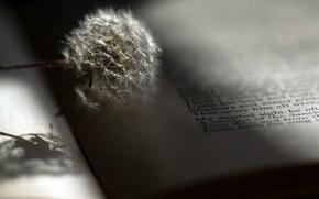 Picture background, dandelion, book