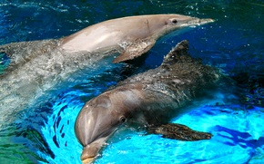 Picture sea, squirt, Dolphin, the game, pool, pair