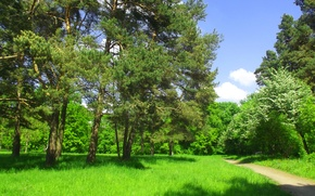 Picture Trees, Pasas, Green