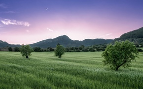 Picture field, the sky, grass, clouds, trees, Mountains, pink, lilac