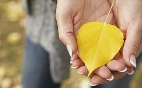 Picture autumn, macro, yellow, sheet, hands, fallen, palm