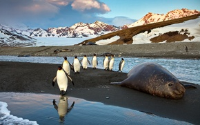 Picture water, mountains, Penguins, sea lion
