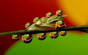 Picture grass, water, drops, macro, Rosa, stem