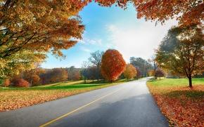 Picture road, autumn, trees, foliage