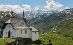 Picture grass, view, Austria, Alps, church, cows