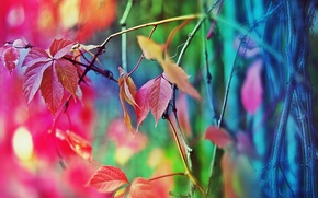 Picture color, tree, the fence, a fall mood