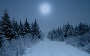 Picture nature, snow, mist