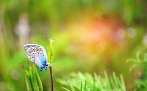 Picture greens, summer, grass, butterfly, day