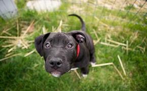 Picture eyes, look, dog, blur, mordashka