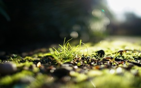 Picture greens, grass, the sun, light, focus