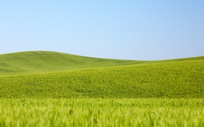 Wallpaper wheat fields, the countryside, wheat, field, the sky, farm, line