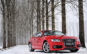 Picture winter, forest, snow, trees, red, Audi, Audi, red