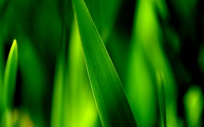 Wallpaper greens, grass, macro, sheet