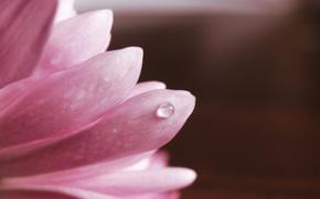 Picture macro, pink, petals