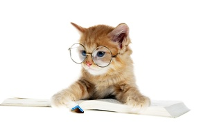 Picture cat, glasses, book, kitty