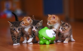Picture kitty, kittens, game, cat, seals, cats, cut the rope, Am Dumb<