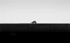 Wallpaper You & Me, background, birds
