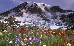 Picture the sky, clouds, snow, flowers, mountains, nature, chamomile, meadow