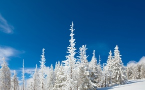 Picture The sky, Nature, Winter, Snow