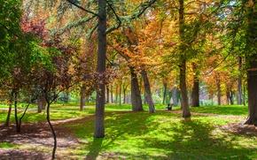 Wallpaper trees, Park, Autumn, trees, park, autumn