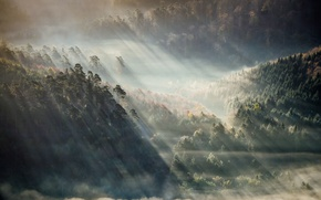 Picture forest, mountains, fog, the sun's rays