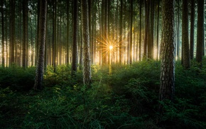 Picture rays, light, nature, the sun, trees, forest